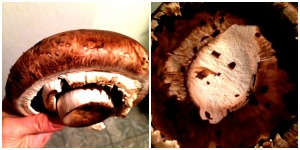 portabello mushroom collage